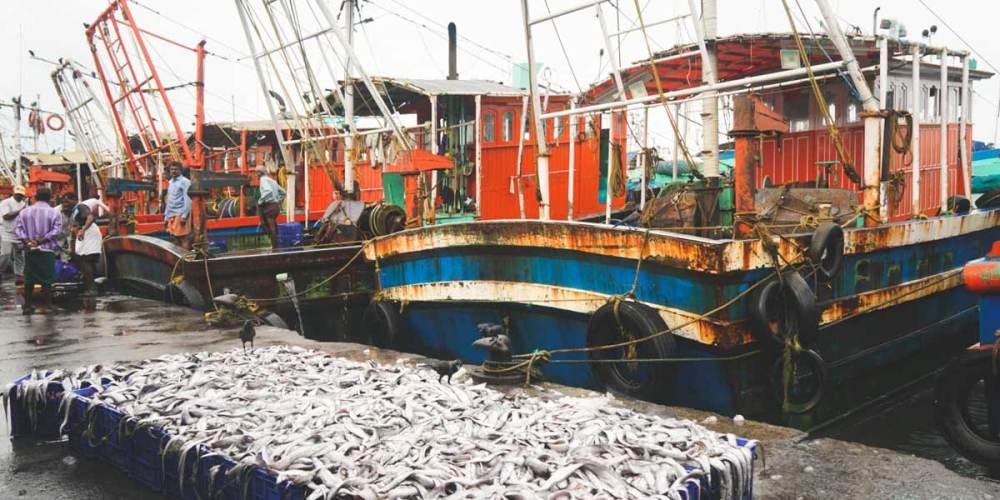 Kozhikode-Fish-Market