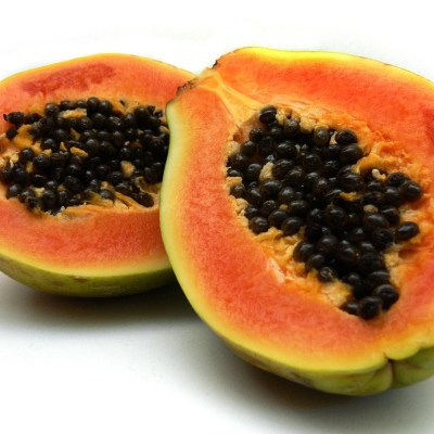 Image of Carica papaya - Paw Paw
