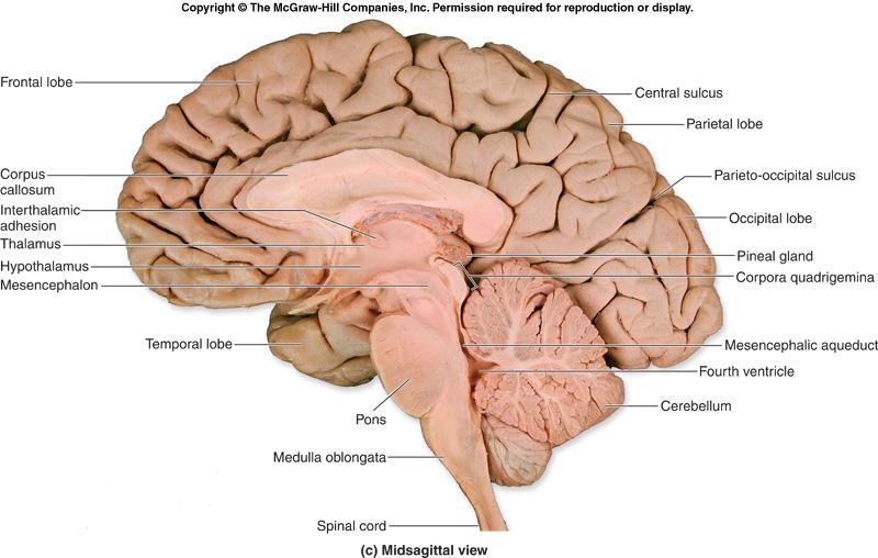 clam diagram labeled sonos play 1 wiring el sistema nervioso