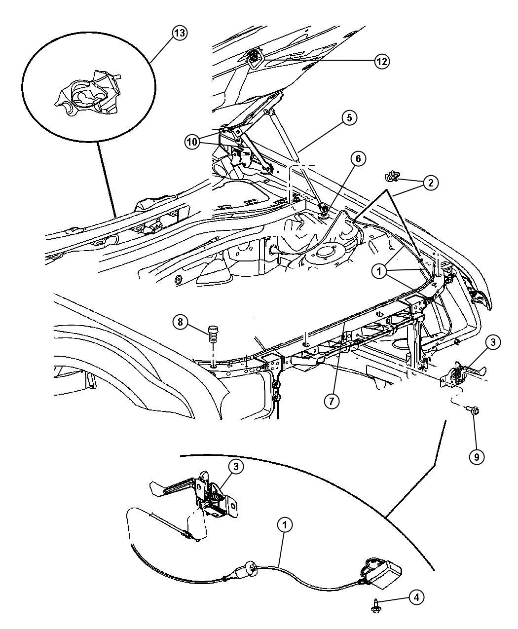 euglena diagram blank ford courier wiring key coloring pages