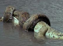 Tropical Rainforest Anaconda | www.pixshark.com - Images ...