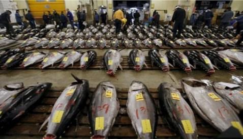 Perdagangan tuna sirip biru Pasifik