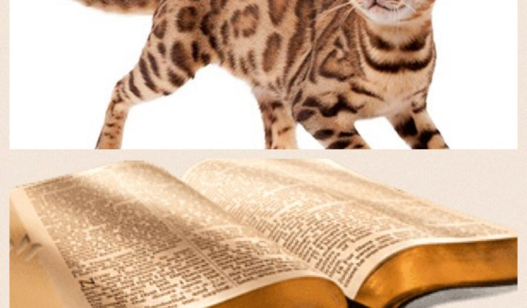 Cat is the only domestic animal,which is not mentioned in the Bible