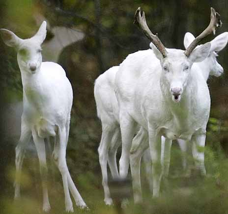 Albino Animals  Animal Pictures and Facts  FactZoocom