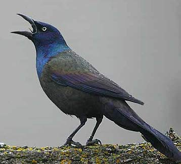 Do You Know These Common Birds  Animal Pictures and