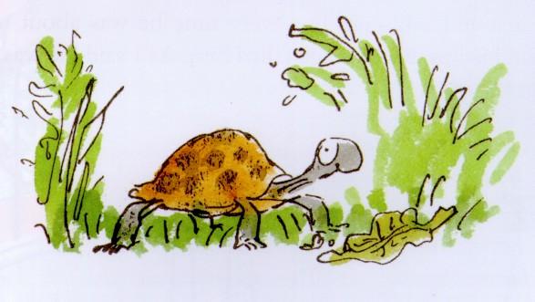 tortoise by Q Blake