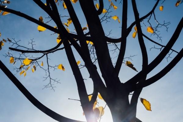 autumn-tree-leaves