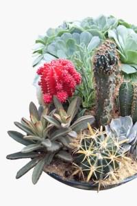 cactus_succulents_albany_latham_saratoga_springs_ny