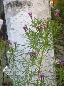 octobermysteryplant
