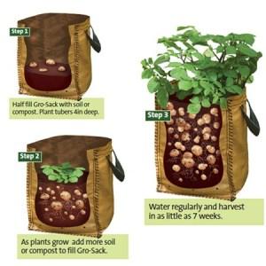 potatobags