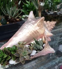 shellgarden