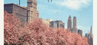 Nah … – Apple Blossoms