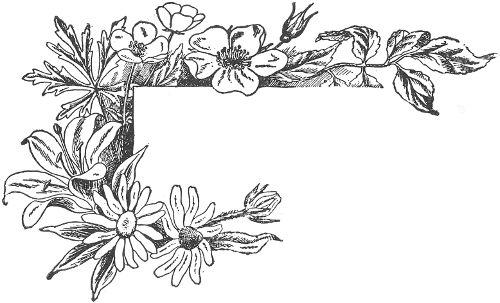 Flower Guide: Wild Flowers East of the Rockies (Revised