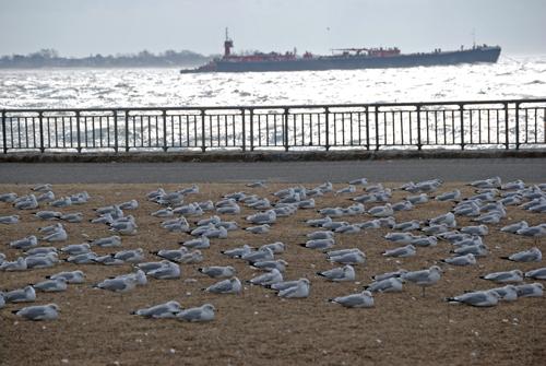 Gulls © Frank H. Jump
