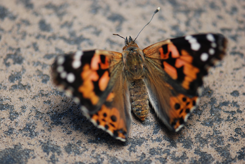 Butterfly Liberation Day