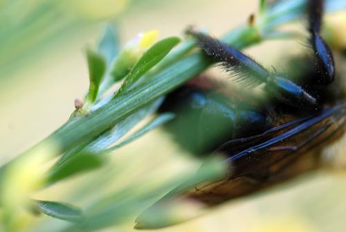 Bee Close