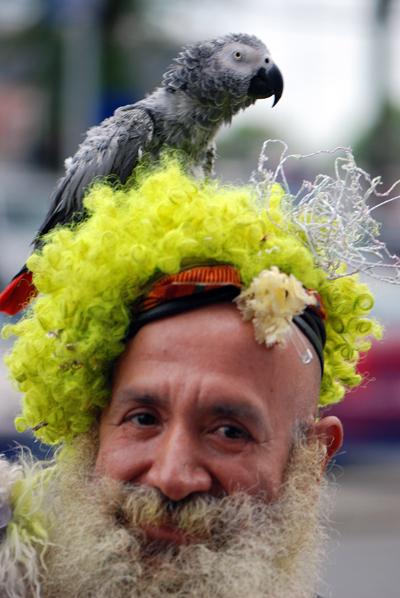 Drag Parrot - Mets