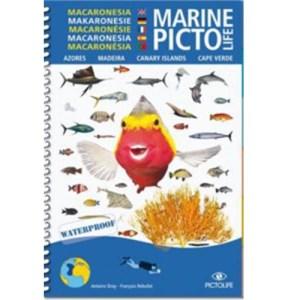 pictolife-macaronesie