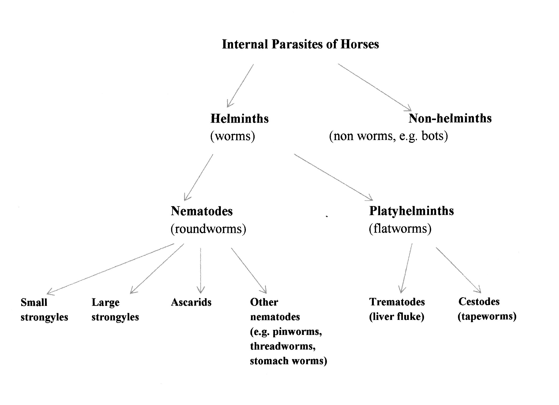 goat intestines diagram pig heart interior internal parasites of horses ruminants and alpacas