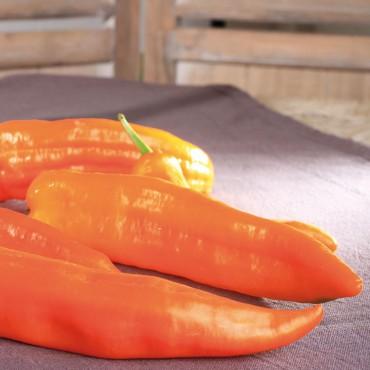 Tomatenwoche ab 02 Mai  Fahn  Kompetenz in Grn