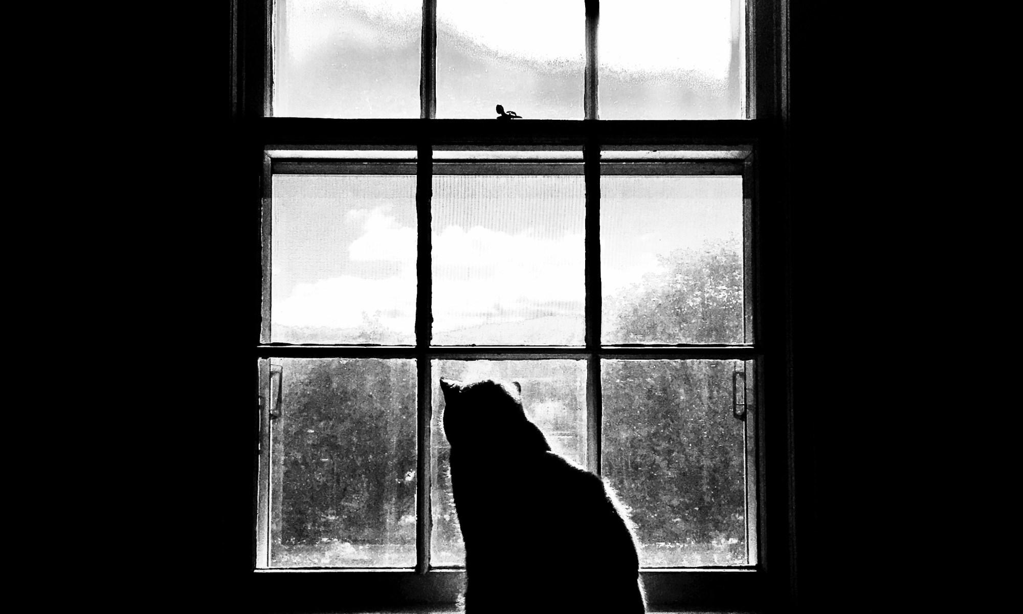 Scrnr, by Tom Fahy