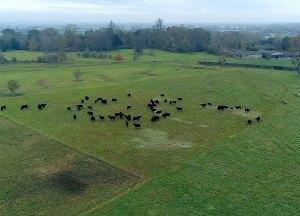 Field Aerial Shot