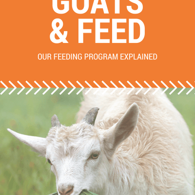 Goat Feed: Our Feeding Program at Fainting Fox Farm
