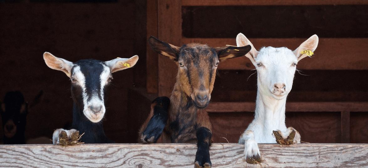 50 Great Books Every Small or Beginning Farmer Needs | Fainting Fox Farm