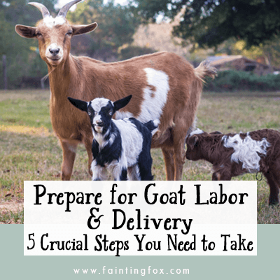 prepare for goat labor and delivery, goat kidding