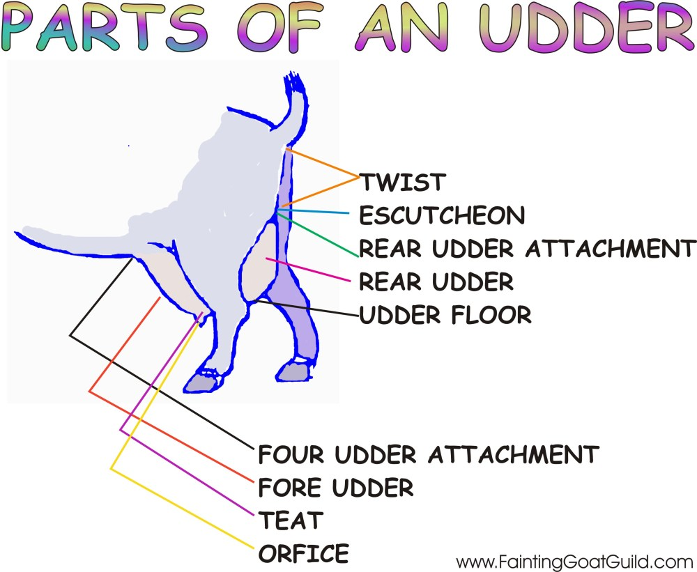 medium resolution of click here for a printable copy of the parts of an udder