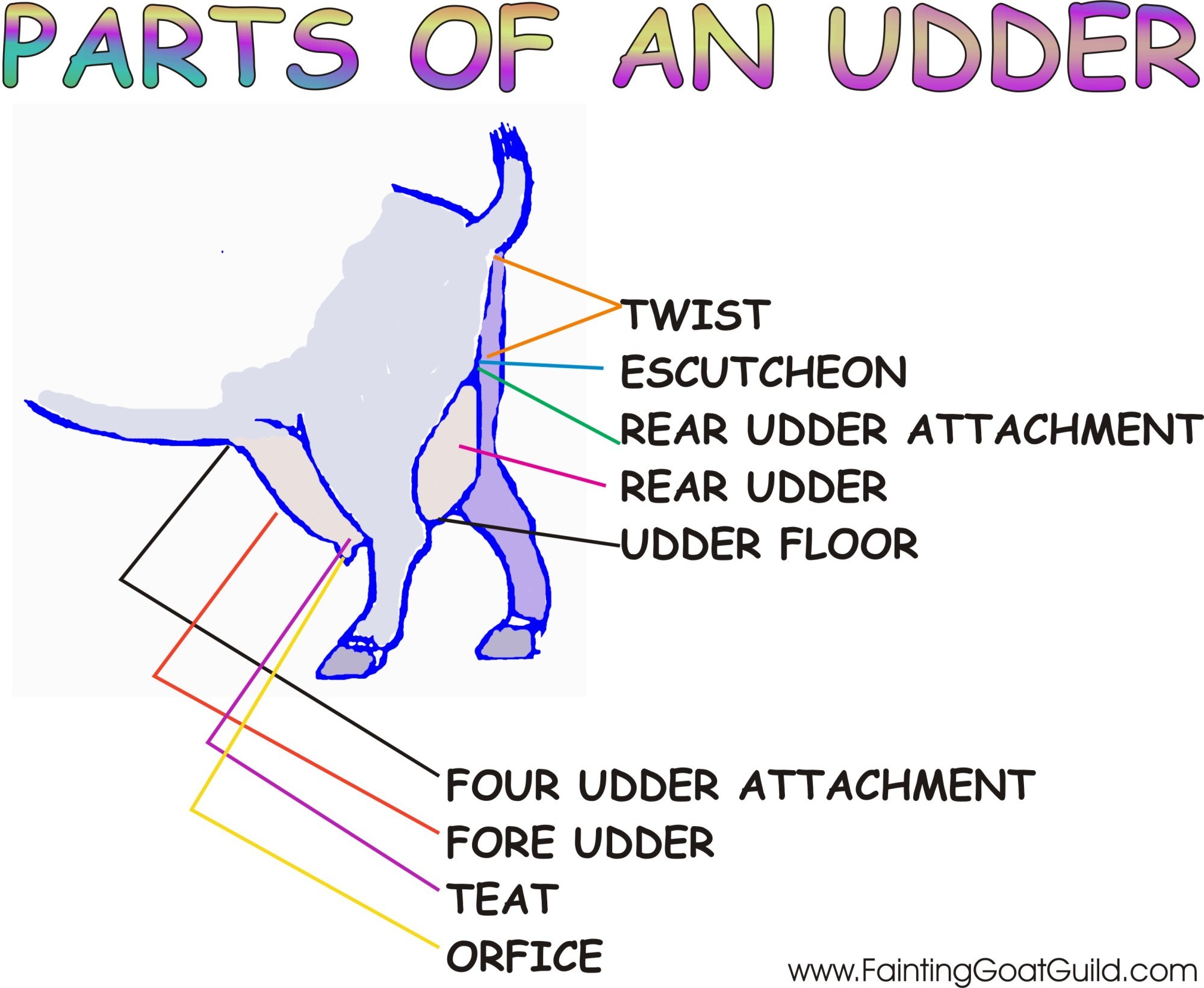 hight resolution of click here for a printable copy of the parts of an udder