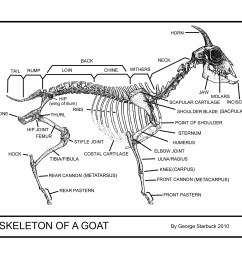 click here for a printable copy of the skeleton of a goat [ 3300 x 2550 Pixel ]