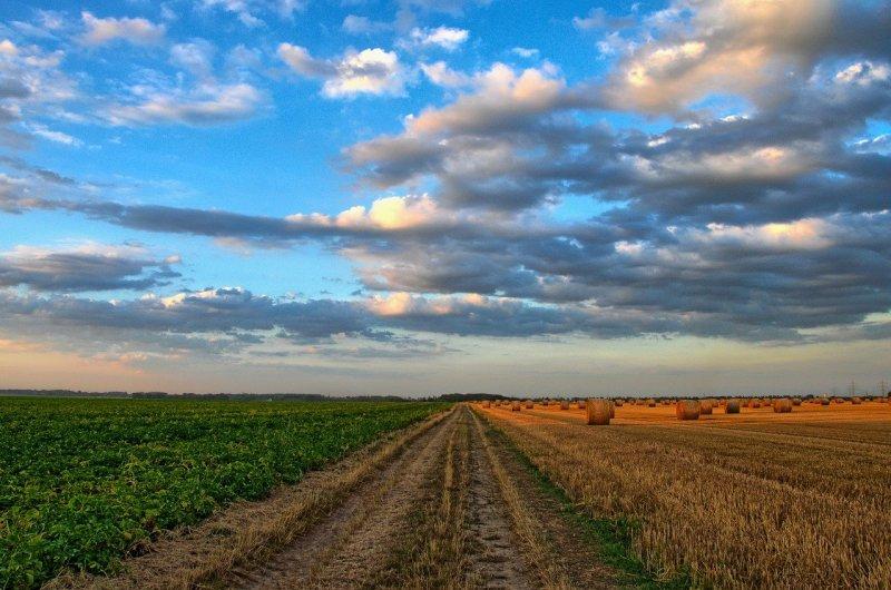 field, road, rural