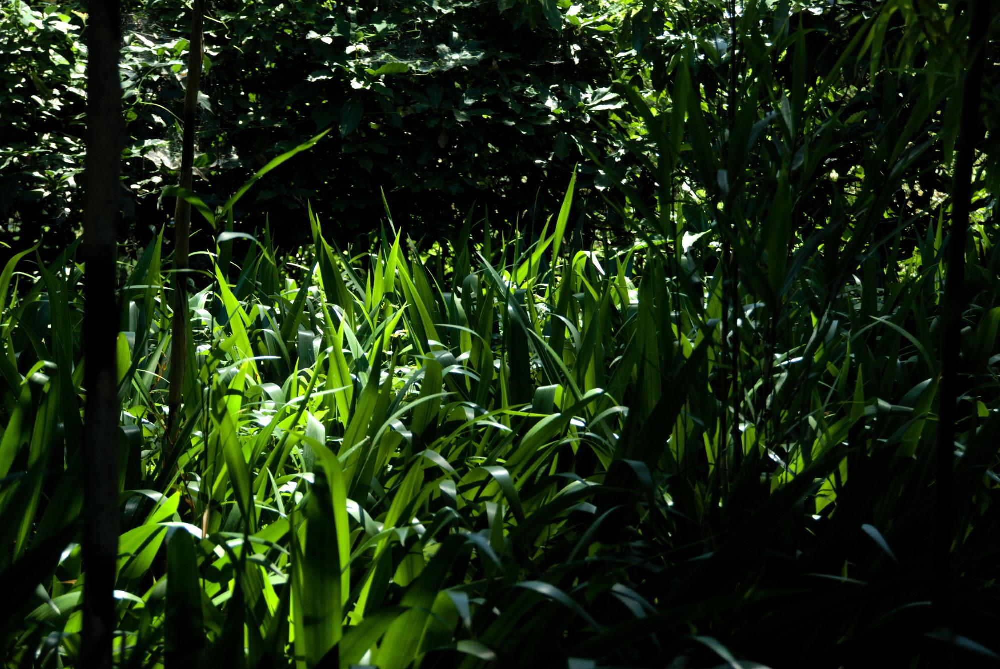 Fair- jolies herbes au Japon – fermeture de la boutique