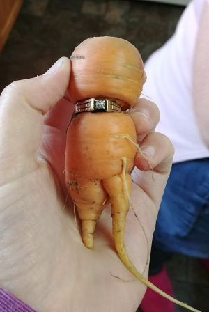 The famous carrot!