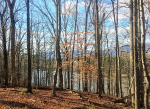 Lots for Building Custom Homes outside Charlottesville Virginia