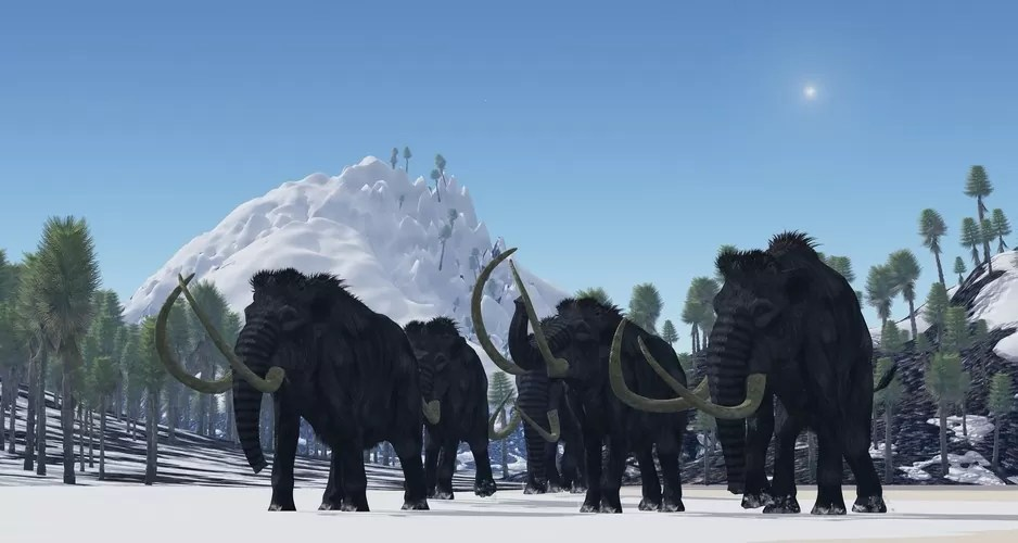 Comeback of the Woolly Mammoth Bringing Back an Extinct
