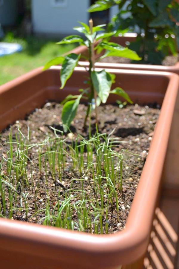 Tattooed Martha - Container Gardening (4)