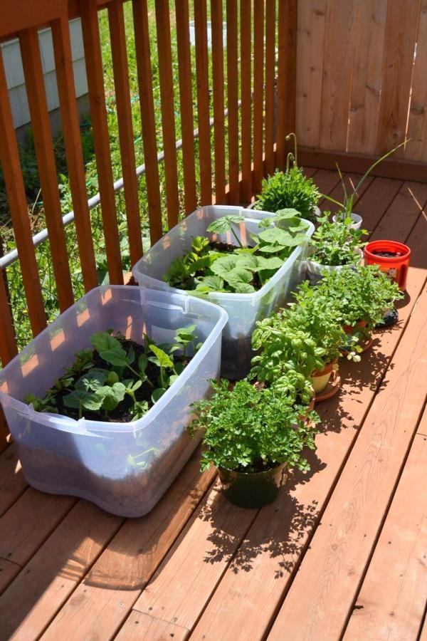 Tattooed Martha - Container Gardening (8)