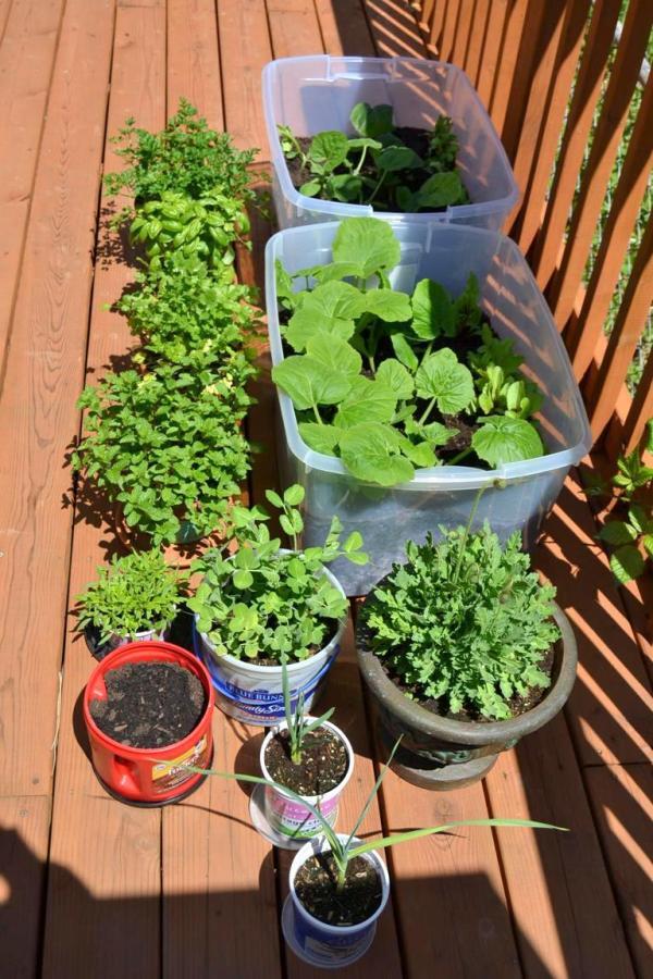 Tattooed Martha - Container Gardening (9)