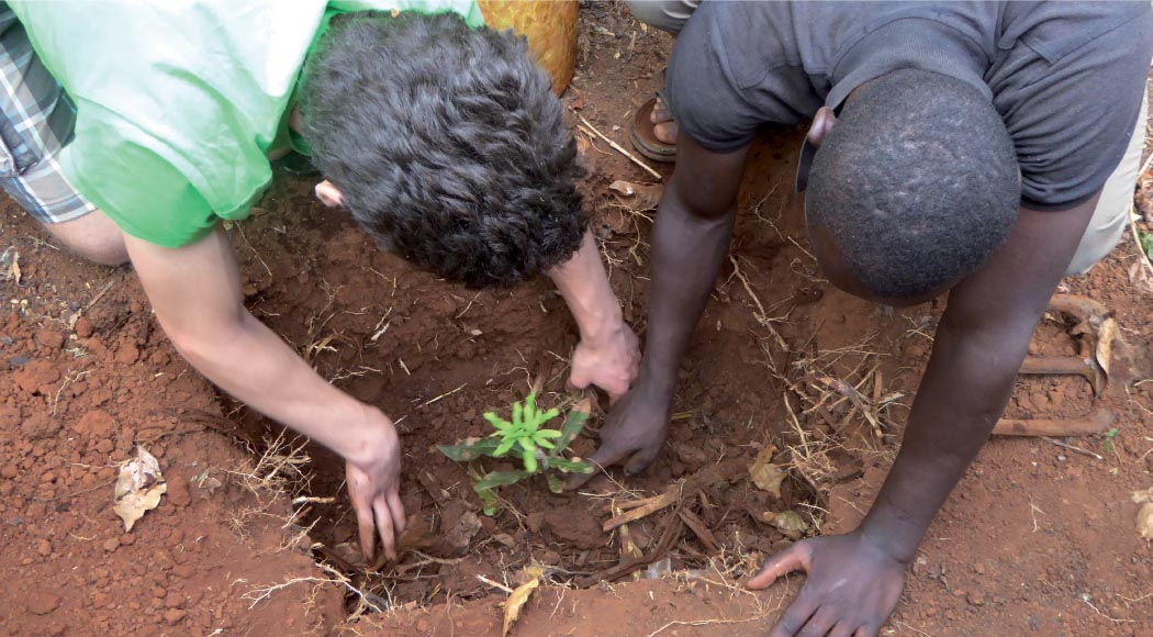 Macadamianüsse aus Kenia