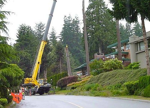 Tree Removal And Maintenance – Why Should You Go With The Pros?
