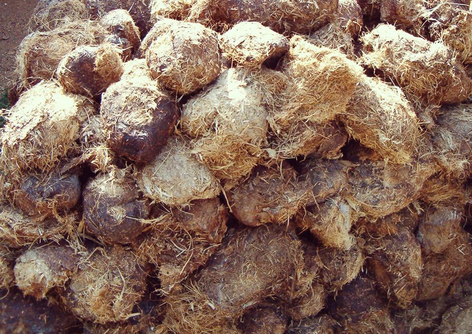elephant dung fiber