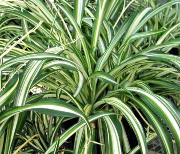 breath of fresh air houseplants