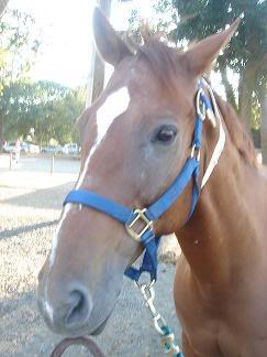 Sea Bass (one of my favorite horses from the UCD Equestrian Center)!