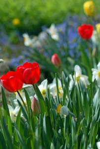 faeries love flowers