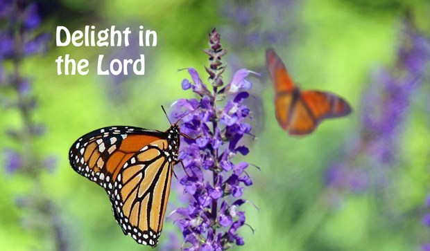You are currently viewing Delight In The Lord