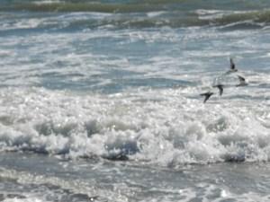 rhode island surf