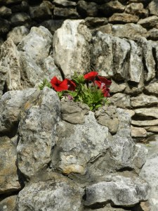 stone and flowers
