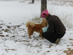 a girl and a dog in the snow